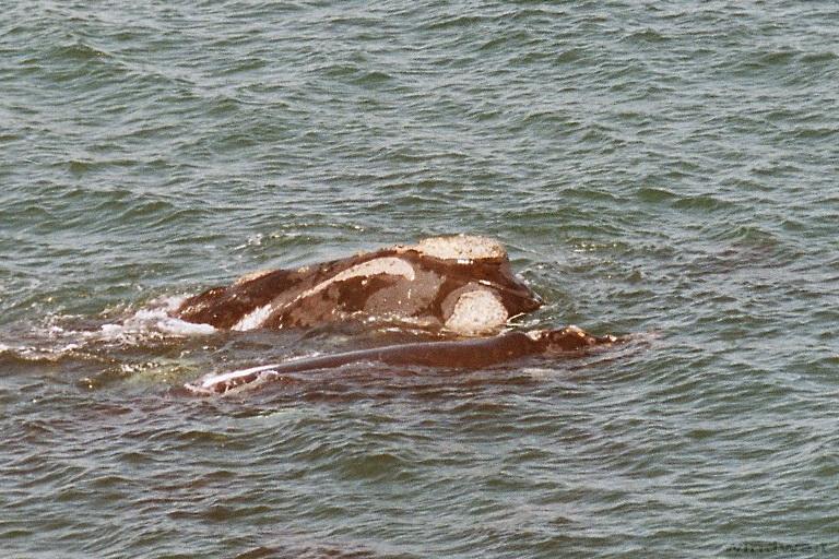 An der Garden Route nach Hermanus – Wale von Nahem