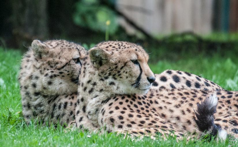 Ein unerwartet kurzer Besuch im Zoo Münster