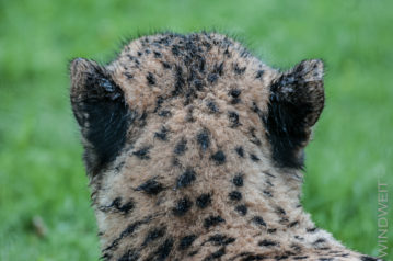 Nass wie eine Katze II
